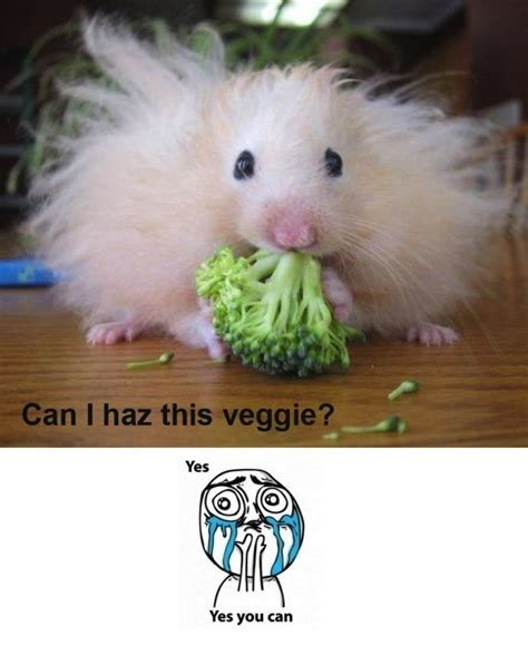 Baby Animal Memes Photography Adventures Fashion And Memes