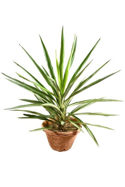 plant pictures pot plant pictures cliparts co