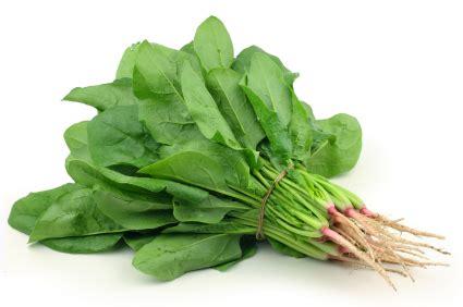 rabbits eat spinach   beware  oxalates