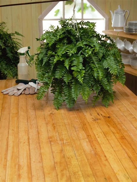 repot houseplants hgtv