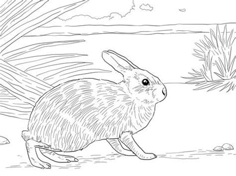marsh rabbit coloring page supercoloringcom