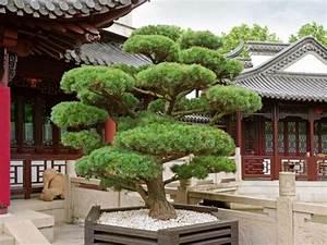 Bonsai Baum Schneiden : knstlicher bonsai stunning knstlicher weinreben bonsai cm with knstlicher bonsai awesome ~ Frokenaadalensverden.com Haus und Dekorationen