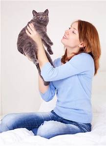 Cats: Prefered Pets of Single Women? - Argos Pet Insurance