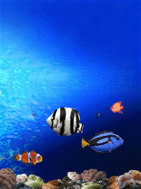 Animated Fish Wallpapers For Mobile Free - fish underwater mobile wallpaper mobile toones