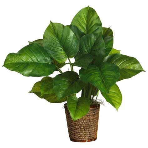 piante da interno con poca luce piante da appartamento con poca luce piante da interno