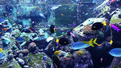 aquarium des deux oceans 3 hours of beautiful coral reef fish relaxing fish aquarium fish tank relax
