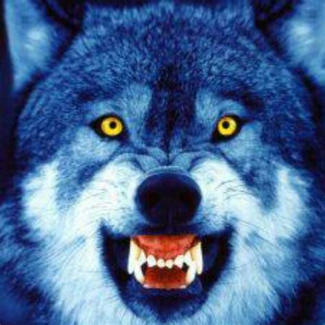 alpha wolf - YouTube