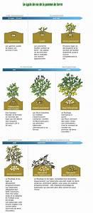 Période Pour Planter Les Pommes De Terre : quand planter des pommes de terre ~ Melissatoandfro.com Idées de Décoration
