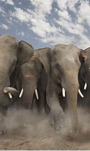 Elephant HD Wallpapers   Download Elephant Desktop HD ...