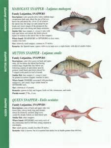 Florida Gulf Fish Identification Chart
