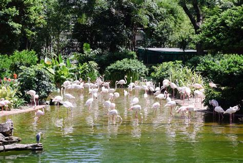 tourist guide  kowloon park  hong kong