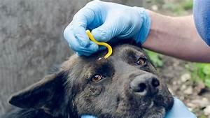 Zecke Entfernen Hund Kopf Steckt : kampf gegen zecken bei hunden und katzen ~ Orissabook.com Haus und Dekorationen