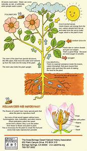 A Kids Guide To The Plants Of Anza