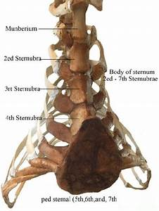 A Photograph Shows The Parts Thorax Of The Camel  Sternum
