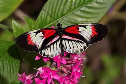 Butterfly Desktop Flowers Butterflies Pink Colorful Wings