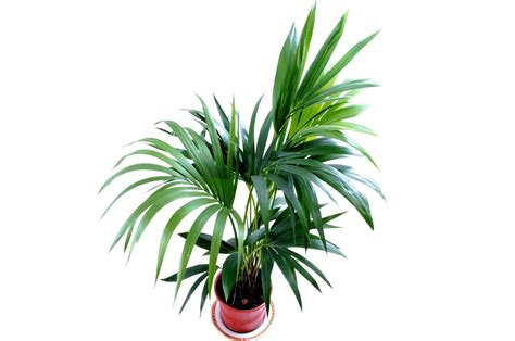 Best Large Indoor Plants For Low Light