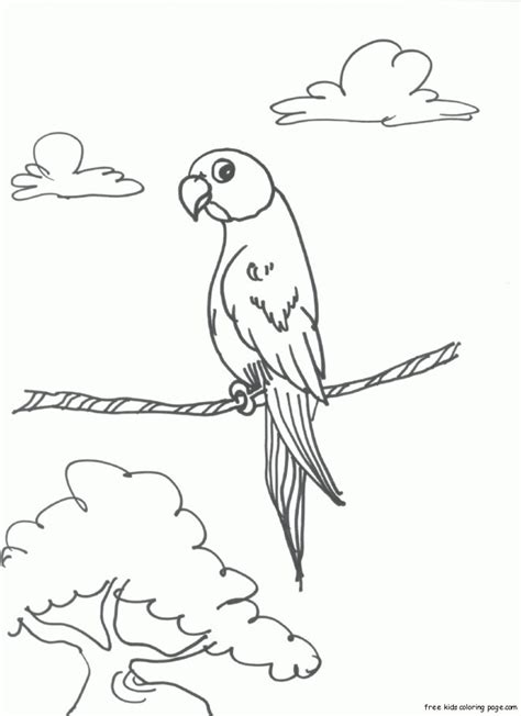 print  bird parrots coloring pages  childrensfree