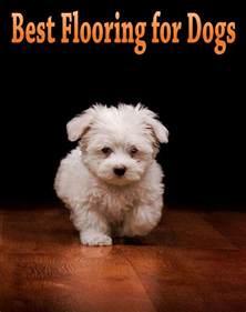 best flooring for dogs corner