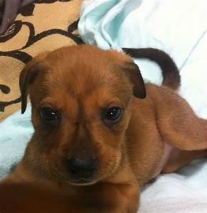 Adopt Gary on | Animal, Adoption and Dog