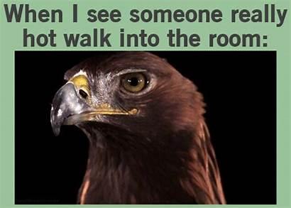 Meme Gifs Eagle Bird Funny Hey Golden