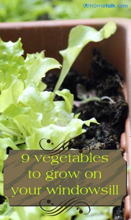 Best Windowsill Vegetables by Best 25 Kitchen Window Sill Ideas On Window