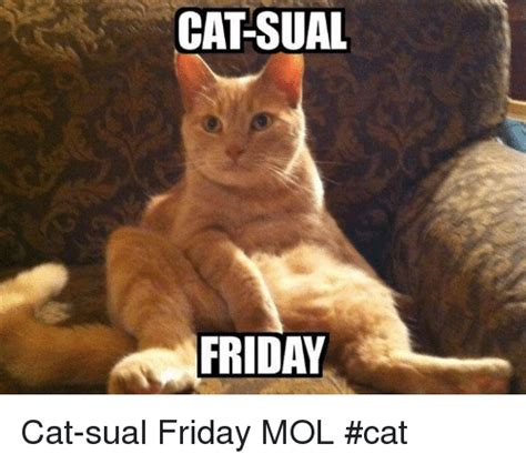 Friday Cat Meme - 25 best memes about friday cats friday cats memes