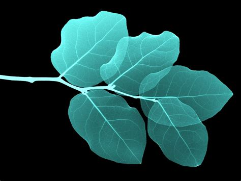black  white wallpapers turquoise leaves wallpaper