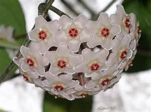 Welche Erdbeeren Sind Die Besten : welche zimmerpflanzen sind die besten ratgeber pflanzen ~ Lizthompson.info Haus und Dekorationen