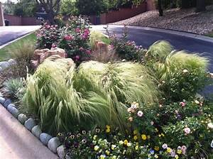 Texas butterfly garden, organic xeriscaping - Traditional