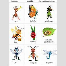 Kids Pages  Insects Great For Japanese Vocab  Christmas Gift Ideas  English Vocabulary