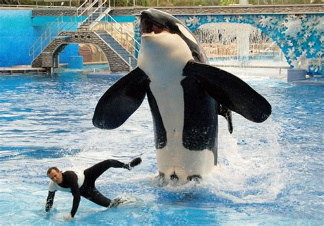 Seaworld's Killer Whale Breeding Comes To An End Following