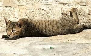 Brown Tabby Kitten Laying in the Sun