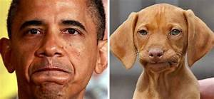 This Twitter Finds People's Dog Doppelgängers And It's ...