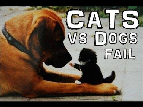 cats  dogs funny cats dogs fail youtube