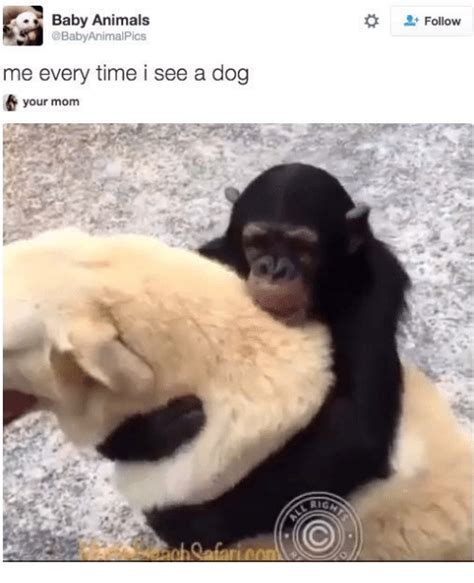 Baby Animal Memes 25 Best Memes About Baby Animal Baby Animal Memes