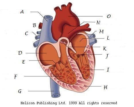 interesting  parts  hearts proprofs quiz
