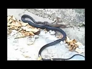 Anaconda vs Komodo - YouTube
