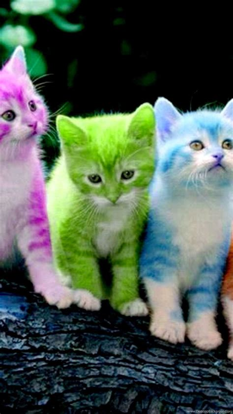 cats colored kitties kittens cats colors cute wallpapers