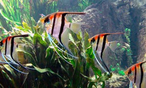 was fressen goldfische was fressen fische seite 2 2 was fressen