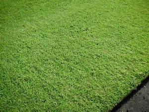 Rouleau Gazon Naturel : gazon de placage en rouleau hors sol gazon naturel evertop ~ Melissatoandfro.com Idées de Décoration