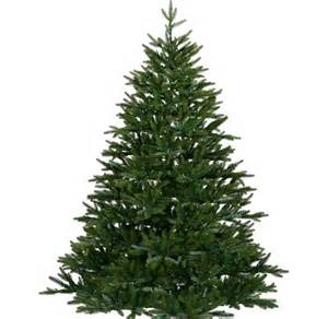 pictures on plain christmas tree easy diy christmas decorations