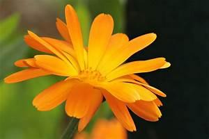 Wirkung Der Farbe Grün : farbe orange wirkung und bedeutung der farbe orange lichtkreis ~ Markanthonyermac.com Haus und Dekorationen