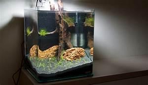 Aquarium Einrichten 60l : aquascaping tipps gr en wie ~ Michelbontemps.com Haus und Dekorationen