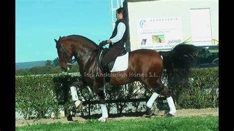 horse dressage andalusian movements prix grand
