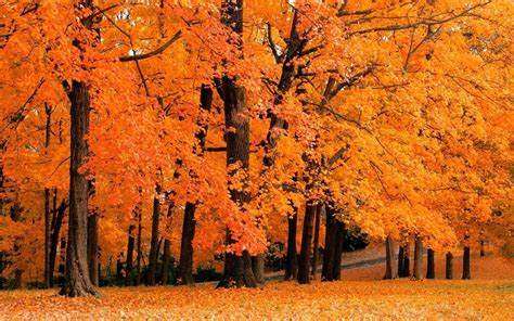 Free Animated Autumn Wallpaper - free autumn screensavers wallpapers wallpaper cave