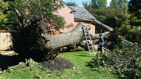 tree removal trimming services   checklist