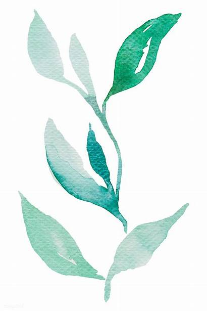 Watercolor Leaves Transparent Branch Mark Element Rawpixel