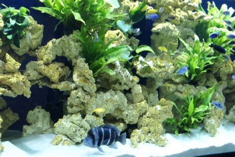 aquaroche recreate a biotope in your aquarium with aquaroche ceramic rocks