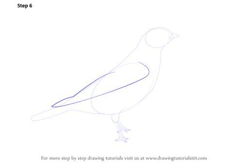 learn   draw  shore lark birds step  step
