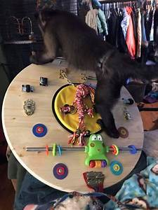 Primate Store - Activity Board